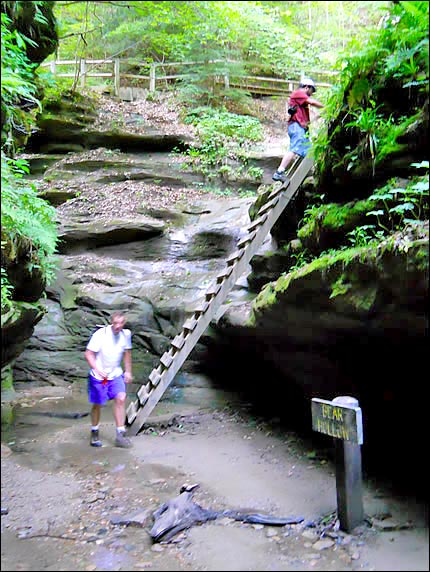 Ladders at Turkey Run State Park