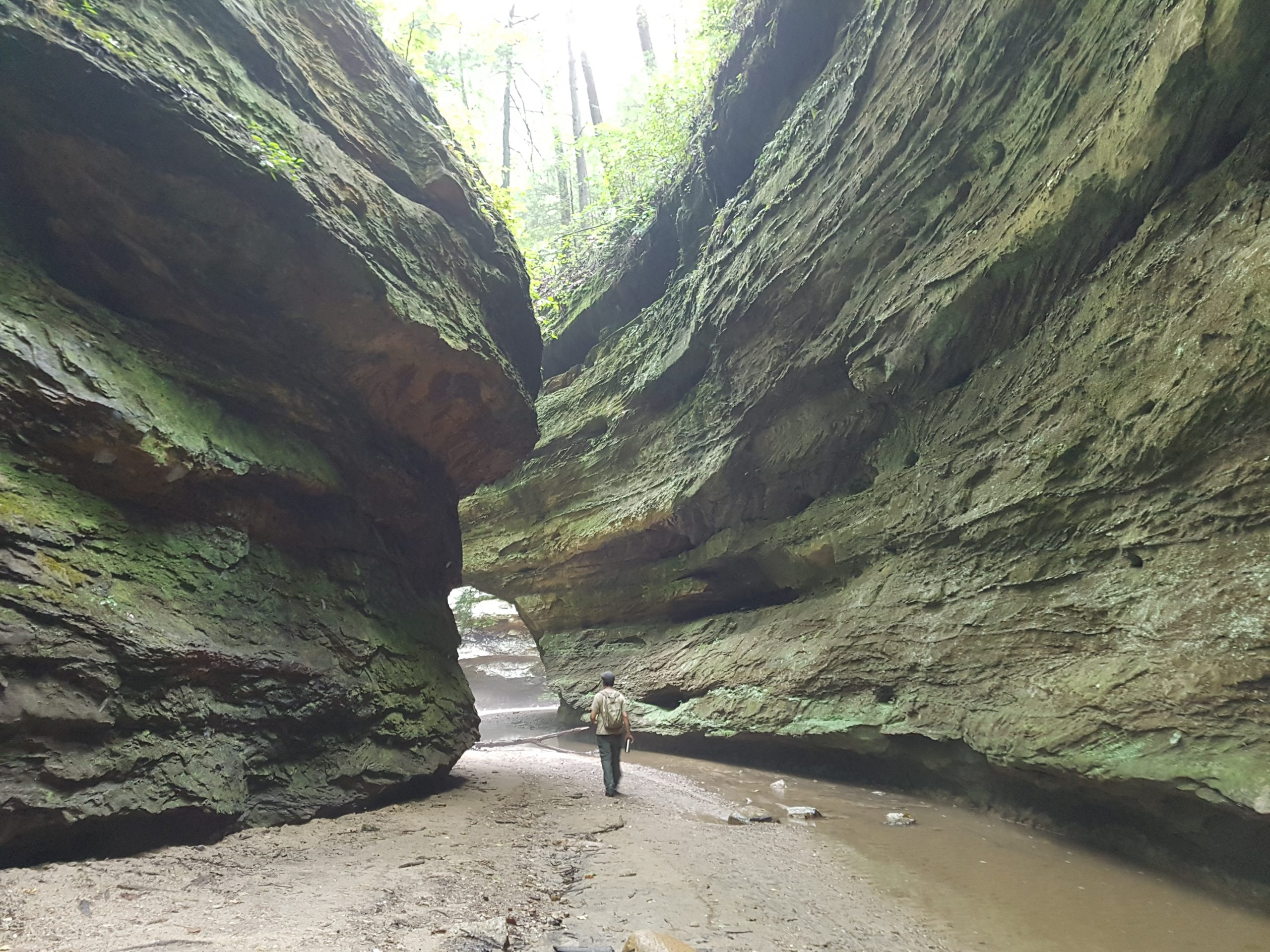 Canyon at Turkey Run State Park